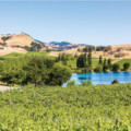 Cuvaison A Napa Valley Icon Embraces its Next Fifty Years